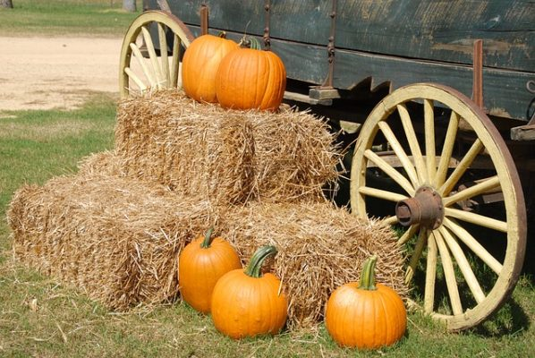 Pumpkins and hay against a wagon